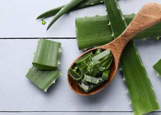 8 Manfaat Aloe Vera untuk Kesehatan dan Kecantikan